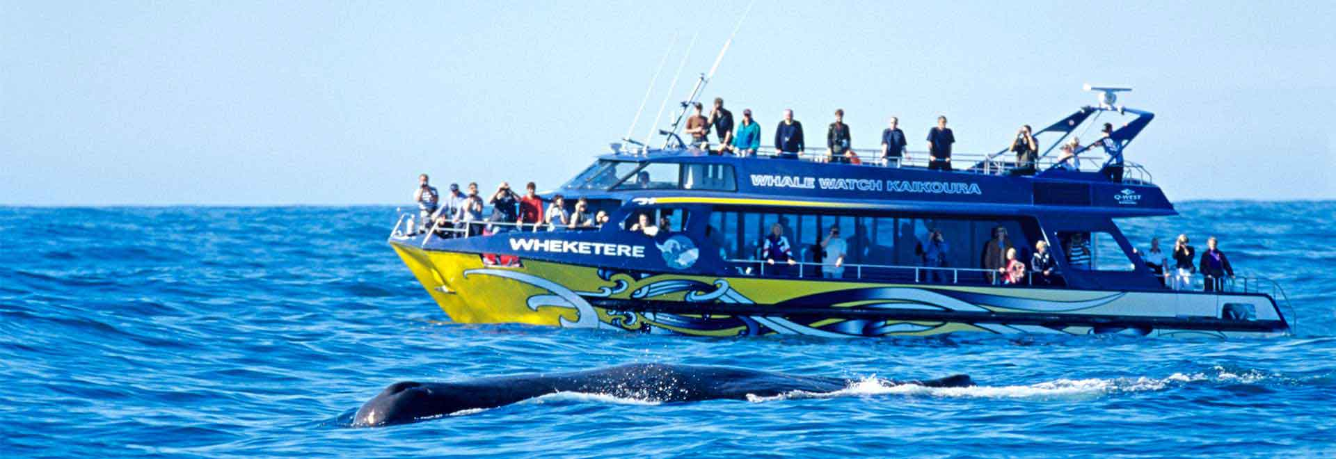 Whale Watching Kaikoura